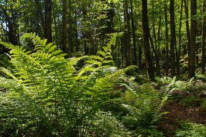 Spring_forest_(5786102321)
