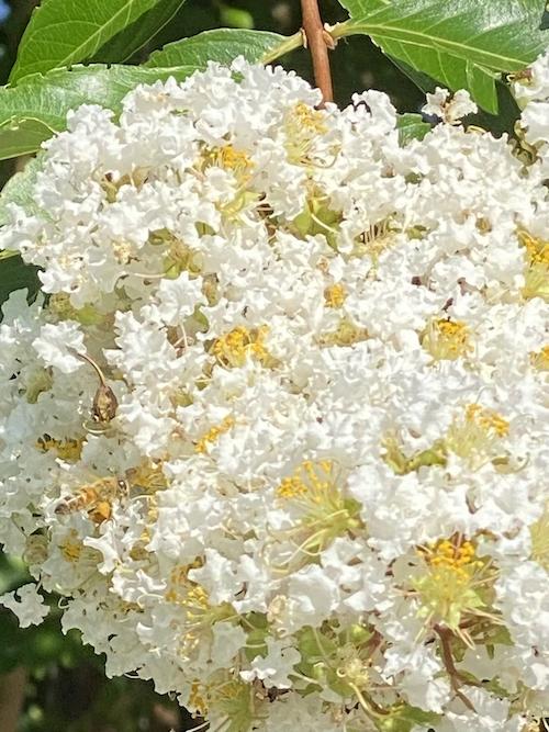 hidden honey bee