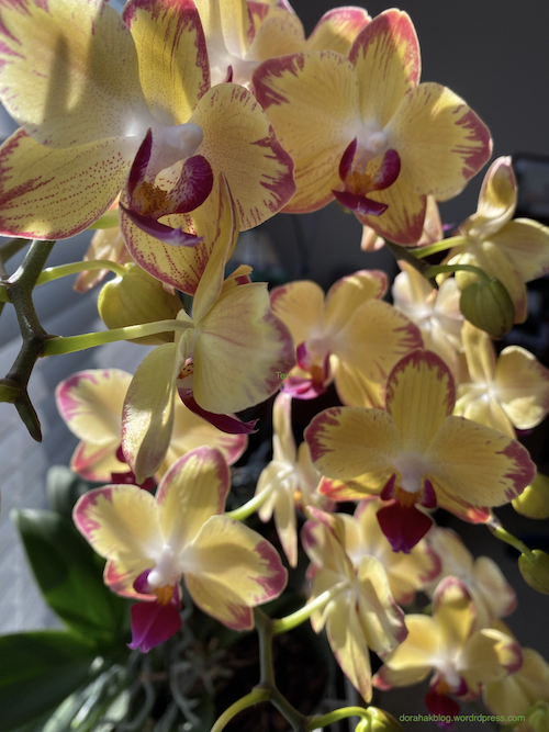 riot-of-orchids